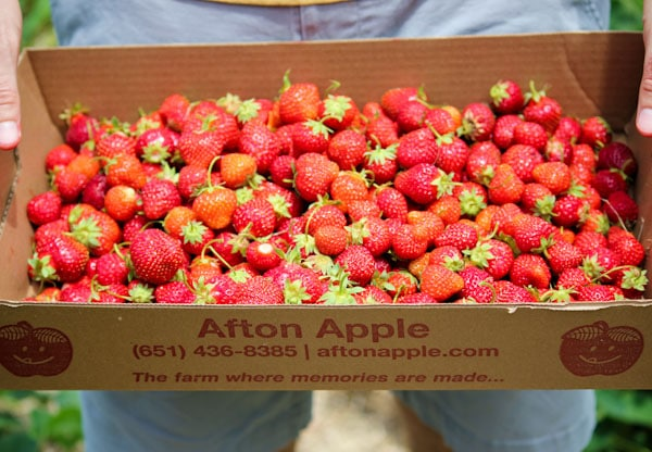berry picking in mn