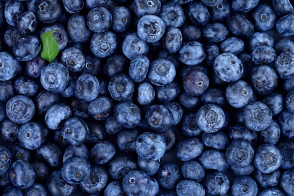 u-pick blueberries