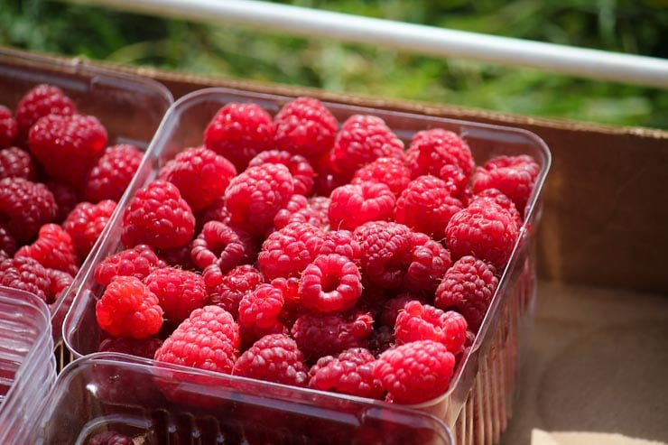 berry picking near the twin cities